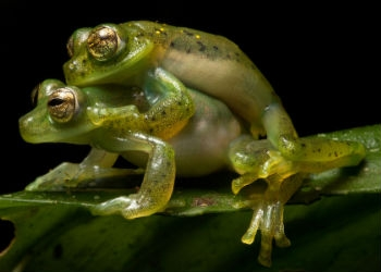 The Bombay Night Frog And The Froggy Style Sex Position
