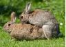 Sex Toy Spotlight: Rabbit Vibrators
